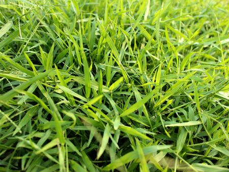 peacefull: green grass in rain season Stock Photo