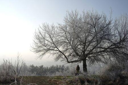 Hoarfrost on trees in Prague park