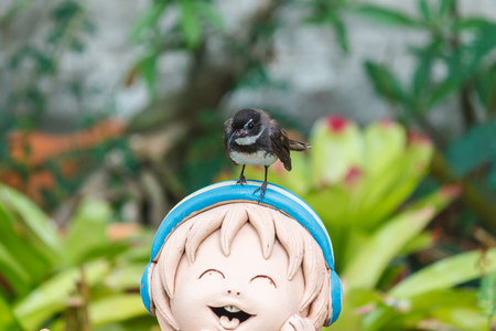 fantail: Fantail bird standing on the smiling clay doll.