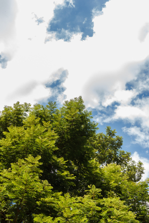 tree landscape: Tree top with blue sky in background.