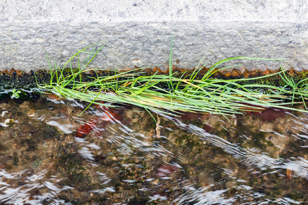 drainage: Grass and plant grow in drainage. Stock Photo