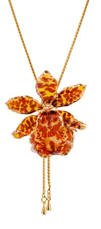 Tiger orchid in gold