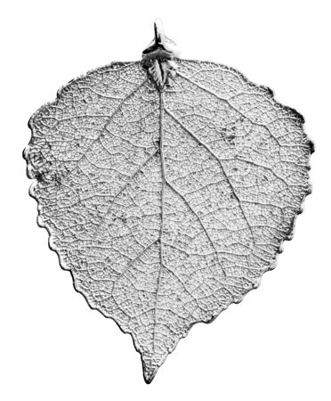 aspen leaf: Real Aspen leaf necklace plated in fine silver