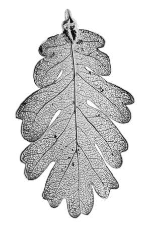 fine silver: Oak leaf plated in fine silver