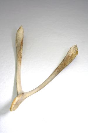 superstitions: Chicken bone