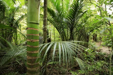 jungle foliage: Tropical forest