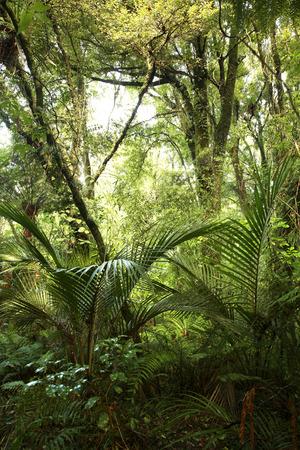 Jungle background Stock Photo - 1647359
