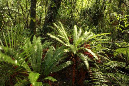 Tropical forest Stock Photo - 1647318