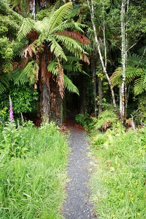 Trail leading into tropical forest photo