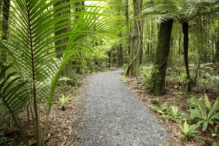Tropical forest photo