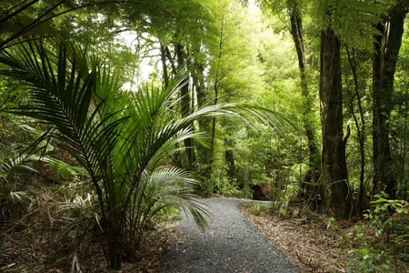 Tropical forest path photo