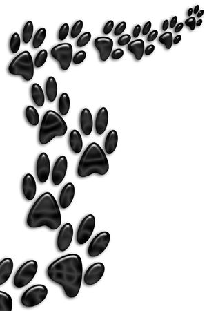 animal tracks: Animal footprints on white background