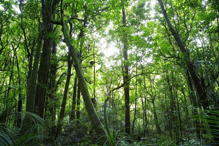 dense forest: Lush green dense tropical forest
