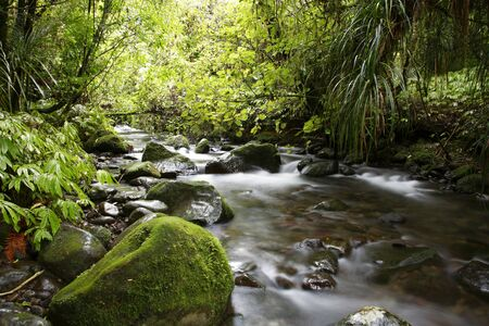 Stream flowing in lush New Zealand tropical forest photo