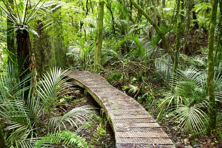 Boardwalk in lush green tropical forest photo