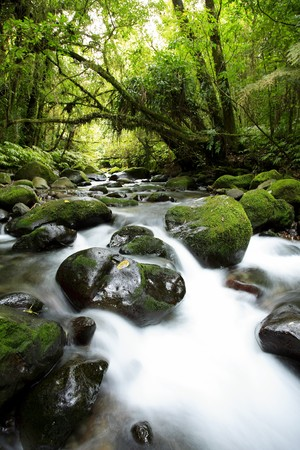cascade: Stream flowing in lush New Zealand tropical forest