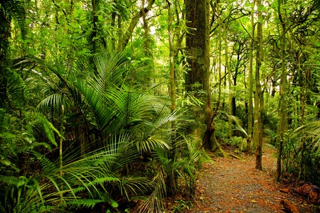 Walking trail in New Zealand tropical forest