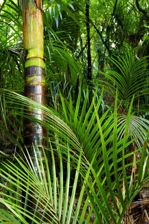 foliage frond: Tropical forest jungle, natural background