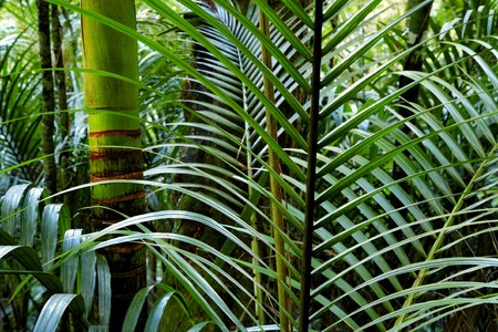 fern: Tropical forest jungle, natural background