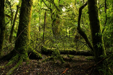dense forest: New Zealand tropical forest jungle