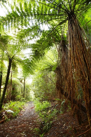 Walking trail in tropical forest  photo