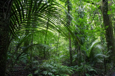 ferns: Tropical jungle forest.Natural background