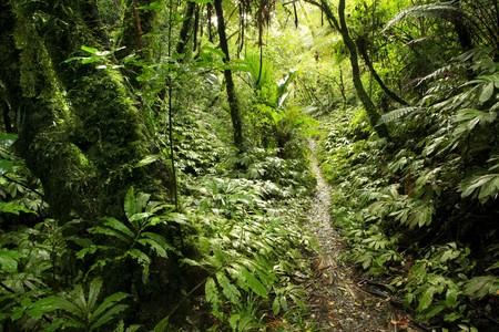 walking trail: Sentiero nella foresta tropicale di nuova Zelanda
