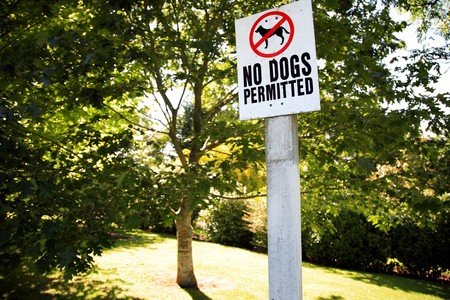No dog sign in park Stock Photo - 8198623