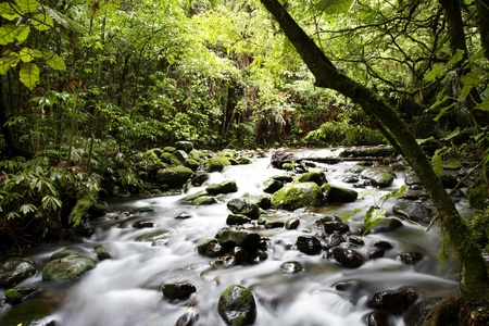 mountain stream: Stream flowing in lush tropical forest