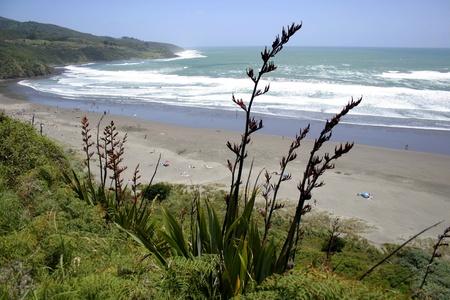 new zealand beach: Raglan, New Zealand.