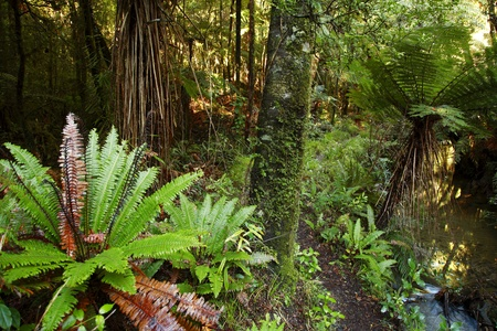 Ferns and trees inside lush tropical forest photo