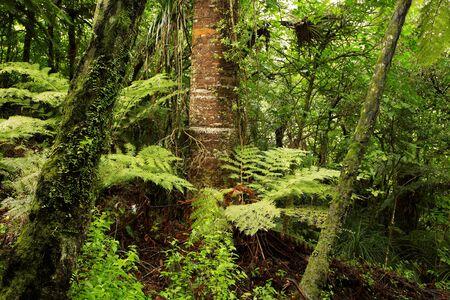 tropics: Tropical jungle