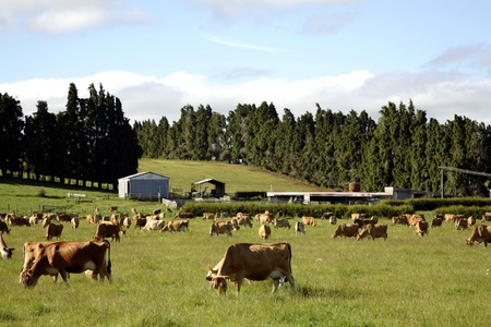 Cow grazing in paddock Stock Photo - 9508118