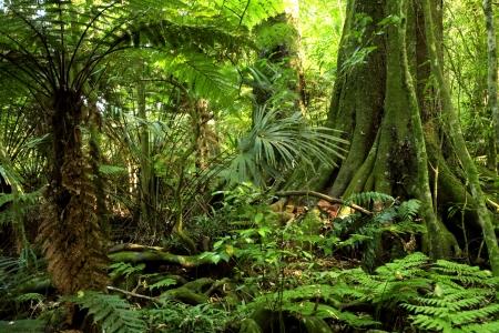 foresta: Foresta di giungla tropicale