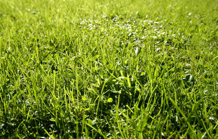 Lawn Stock Photo - 9508117