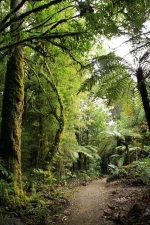 Beautiful lush forest photo