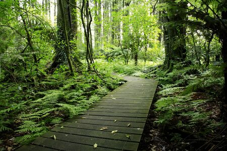 Boardwalk in tropical forest photo