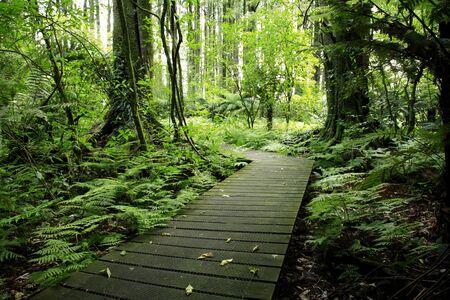 boardwalk trail: Boardwalk in tropical forest