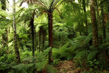 Lush tropical forest photo