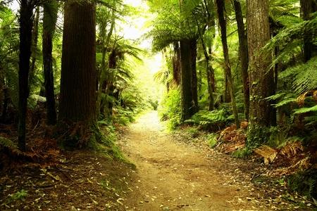 houtsoorten: Bospad
