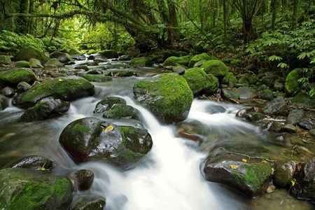 rock creek: Stream in New Zealand forest