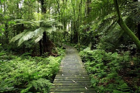 tropical rainforest: Footpath in tropical forest