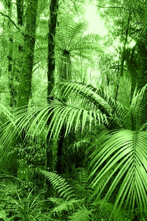 tropical rainforest: Forest background Stock Photo