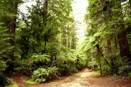 woodland path: Trail in forest Stock Photo
