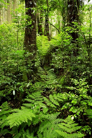 Lush green tropical rain forest Stock Photo