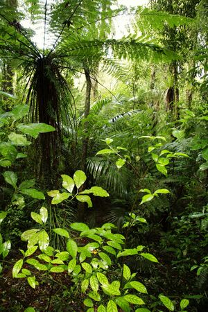 unspoilt: Tropical rain forest