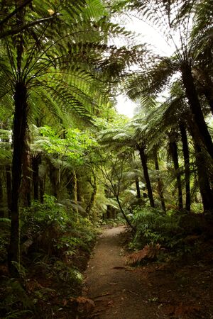 Trail inside tropical forest photo