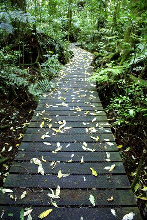 boardwalk trail: Boardwalk walking trail in tropical forest Stock Photo