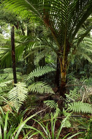 Tropical forest, New Zealand photo