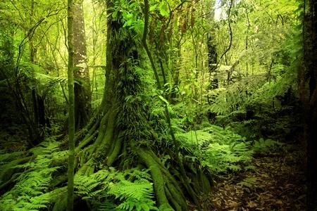 Lush plants in tropical jungle Stock Photo - 10425558